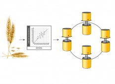 Схема создания сети диафаноскопов ЯНТАРЬ
